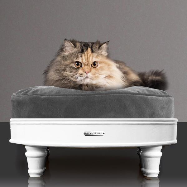 josephine-cat-1