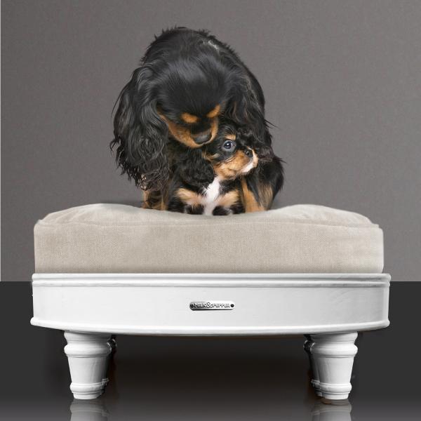 josephine-natural-dog