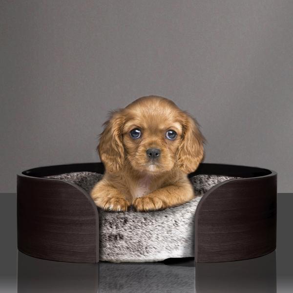 st-moritz-brown-chien